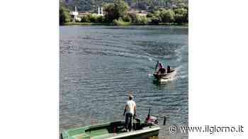 Acqua calda, morìa di pesci a Olginate - Il Giorno