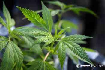 Tot een jaar cel voor plukkers die worden betrapt in cannabisplantage - Gazet van Antwerpen