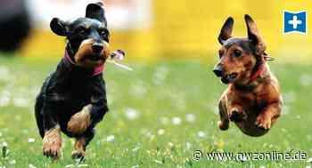 Apen: CDU hält an Freilauffläche für Hunde fest - Nordwest-Zeitung