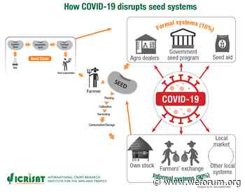 These seeds could prevent a COVID-19 food crisis in Africa - World Economic Forum