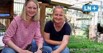Tierheim Schwarzenbek: Vermittlung läuft langsam wieder an - Lübecker Nachrichten