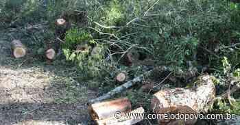 Entidade ecológica denuncia corte de centenas de árvores nativas em Passo Fundo - Jornal Correio do Povo