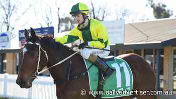 Zakeriz and Miss Amelia record back-to-back wins at Albury meeting - Daily Advertiser