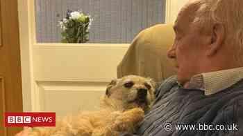 Coronavirus: 'I loaned my pet to someone self-isolating'