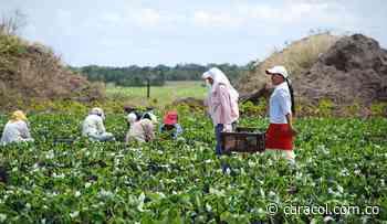 Mujeres de Boyacá, expertas en cultivos de tubérculos - Caracol Radio