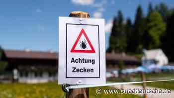 Mehr Borreliose-Fälle in Rheinland-Pfalz - Süddeutsche Zeitung