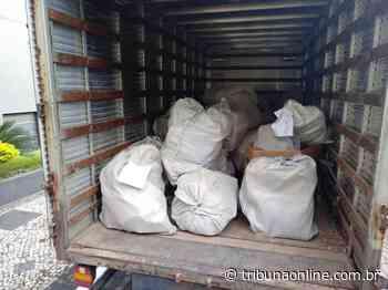 Polícia Federal queima mais de uma tonelada de drogas em Vila Velha - Tribuna Online