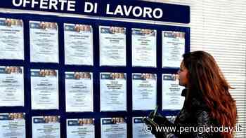 Gli oscar dell'olio extravergine a Perugia: il miglior fruttato leggero a livello nazionale è made in Umbria - PerugiaToday