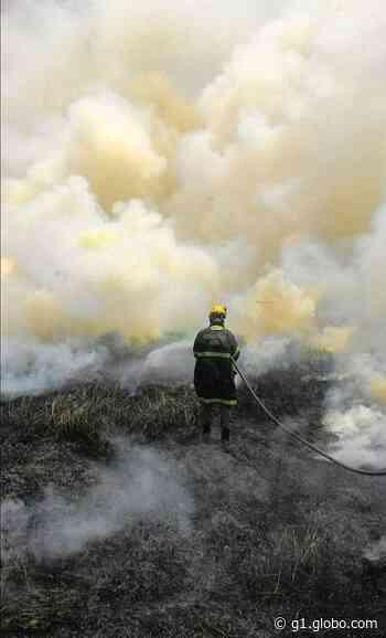 Número de queimadas urbanas cresce 88% em Rio Branco no primeiro semestre deste ano - G1
