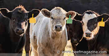The true cost of respiratory challenges in weaned calves