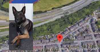 Cash and drugs found on moped rider after police dog chase in woods
