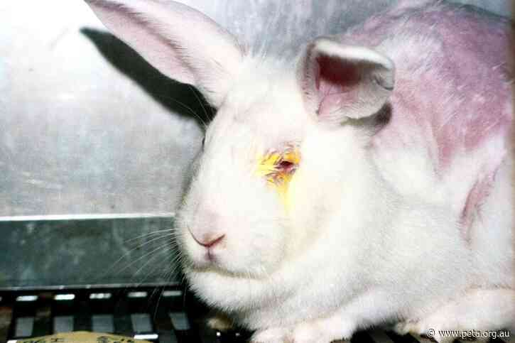 Australia's Cosmetics Testing Laws are in Force… But What Do They Really Mean For Animals?