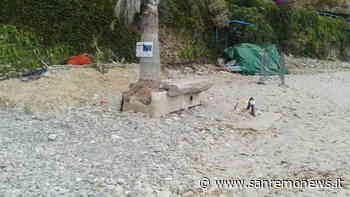 Sanremo: rifiuti abbandonati sulla spiaggia, la risposta di Amaie Energia ad un lettore - SanremoNews.it