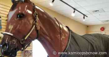 Full-size model horse stolen out of Valleyview - KamloopsBCNow