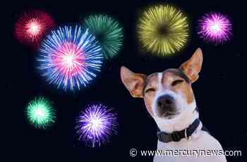 San Jose dog terrorized to death by 4th of July fireworks - The Mercury News