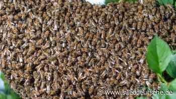 Frau bei Angriff von Bienenschwarm durch 25 Stiche verletzt - Süddeutsche Zeitung
