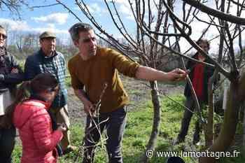 Le Conservatoire d'espaces naturels d'Auvergne, à Riom, recherche de nouvelles variétés d'arbres fruitiers - Riom (63200) - La Montagne