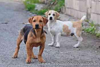 Forquilhinha terá programa para controle populacional de cães e gatos - Forquilhinha Notícias
