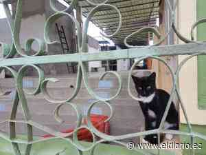 Piden trasladar a gatos del cementerio de Tarqui a un albergue - El Diario Ecuador