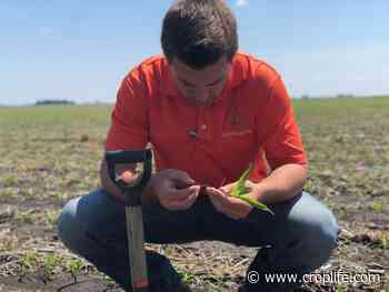 AgLaunch, Tennessee Department of Agriculture Continue Partnership to Support Field-Trial Projects - CropLife