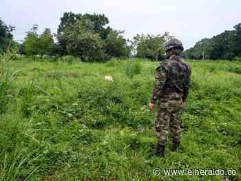 Grupos al margen de la ley estarían invadiendo propiedades en Ayapel - El Heraldo (Colombia)