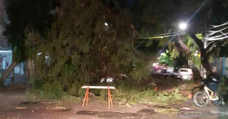 Porto Alegre ainda tem ruas bloqueadas por queda de árvores na noite desta quarta - GauchaZH