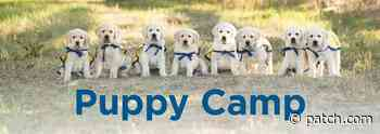 Jul 13 | Puppy camp for 7-10 year olds | Lamorinda, CA Patch - Patch.com