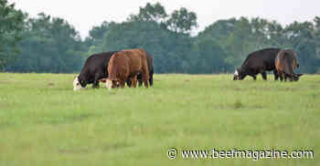 Reseeding project will use cattle grazing to restore ecosystem