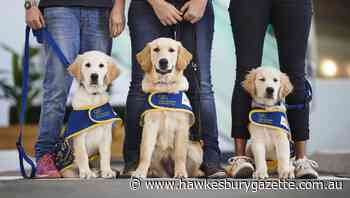 Puppies compete to promote annual Petbarn fundraiser - Hawkesbury Gazette