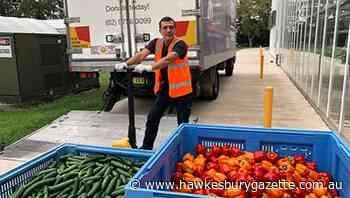 Western Sydney University's Hawkesbury Glasshouse donates 58 tonnes of vegetables to Foodbank - Hawkesbury Gazette