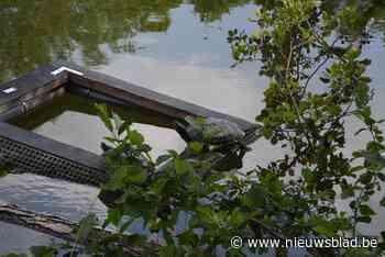 Schildpaddenvangst gesaboteerd: onbekende zet kooien open - Het Nieuwsblad