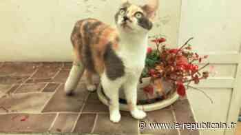 Essonne : une cagnotte en ligne pour faire opérer son chat à Arpajon - Le Républicain de l'Essonne