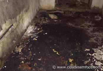Em Picos, filhotes de cães morrem queimados e perícia aponta incêndio criminoso - Cidades em Foco