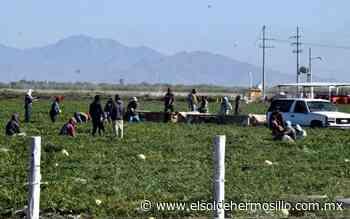 Denuncian posible trata de personas en campo agrícola de Caborca - El Sol de Hermosillo