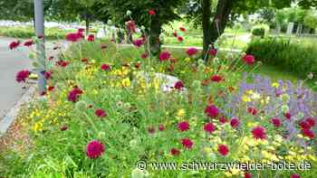 Villingen-Schwenningen: Ärger um dreiste Blumen-Diebe - Villingen-Schwenningen - Schwarzwälder Bote