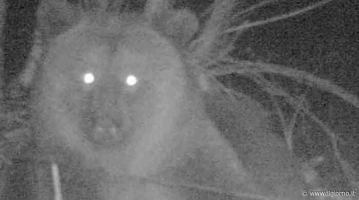 """Sondrio, l'ufficio Caccia provinciale: """"L'orso non è pericoloso, basta usare le reti"""" - IL GIORNO"""