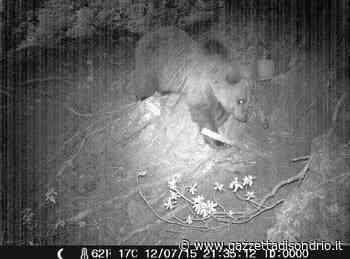 Presenza orso in valle: incontro in Provincia - La Gazzetta di Sondrio