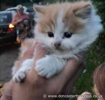 This tiny kitten was rescued by Doncaster fire fighters after 'being thrown from a moving van' - Doncaster Free Press
