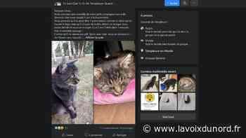 À Templeuve-en-Pévèle, des chats disparaissent depuis fin avril, la plupart sont empoisonnés - La Voix du Nord