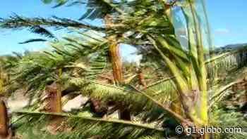 Ventos causam estragos na zona rural de Guaratuba - G1