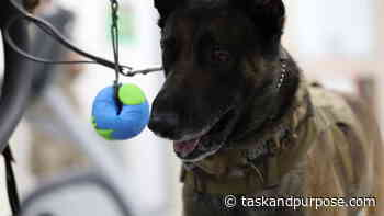 Cute Air Force dog gets physical therapy after heat-related injuries - Task & Purpose
