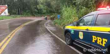 Árvore cai na pista e bloqueia BR-116 em Caxias do Sul - O Diário