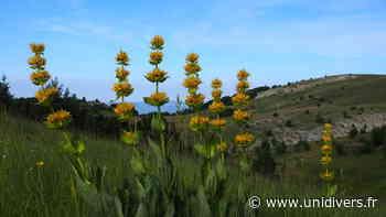 Randonnée « La flore des crêtes de Lure » Montagne de Lure dimanche 7 juin 2020 - Unidivers