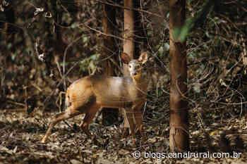 Manejo sustentável realizado pela Suzano registra 1,2 mil espécies em MS - Canal Rural