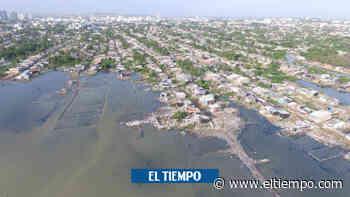 El ecocidio que está matando a la ciénaga de la Virgen, en Cartagena - El Tiempo