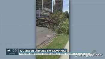 Árvore cai em avenida na região do Taquaral, em Campinas - G1