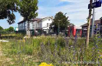 Weeze will weniger mähen: Die Gemeinde will brachliegende Flächen den Pflanzen und den Insekten überlassen - Lokalkompass.de