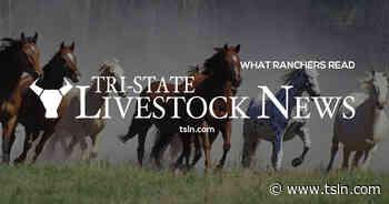 Emerald Ash Borer Moving West | TSLN.com - Tri-State Livestock News