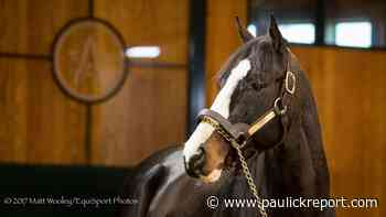 Tourist's First Winner At Stud Comes At Emerald Downs - Horse Racing News - Paulick Report