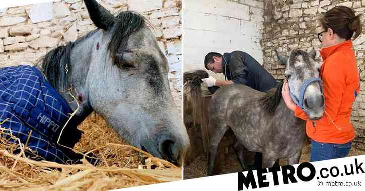Pony dies in front of rescuers after being brutally beaten 'by teenagers'